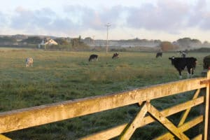 autumnal-mornings-countryside-blog-country-living-good-life-broughgammon