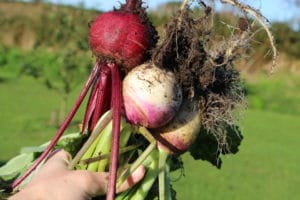 slow-lifestyle-gardening-seasonal-food-october-autumn-960x640