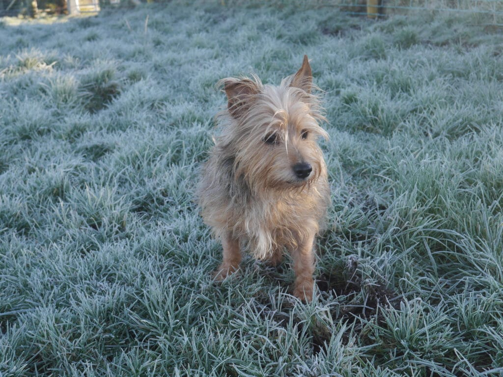 frosty-walk-terriers-tweeds-northern-ireland-antrim-blogger