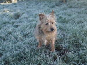 frosty-walk-terriers-tweeds-northern-ireland-antrim-blogger