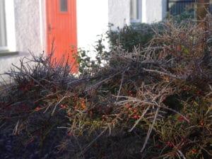 irish-cottage-blog-winter-morning-red-door