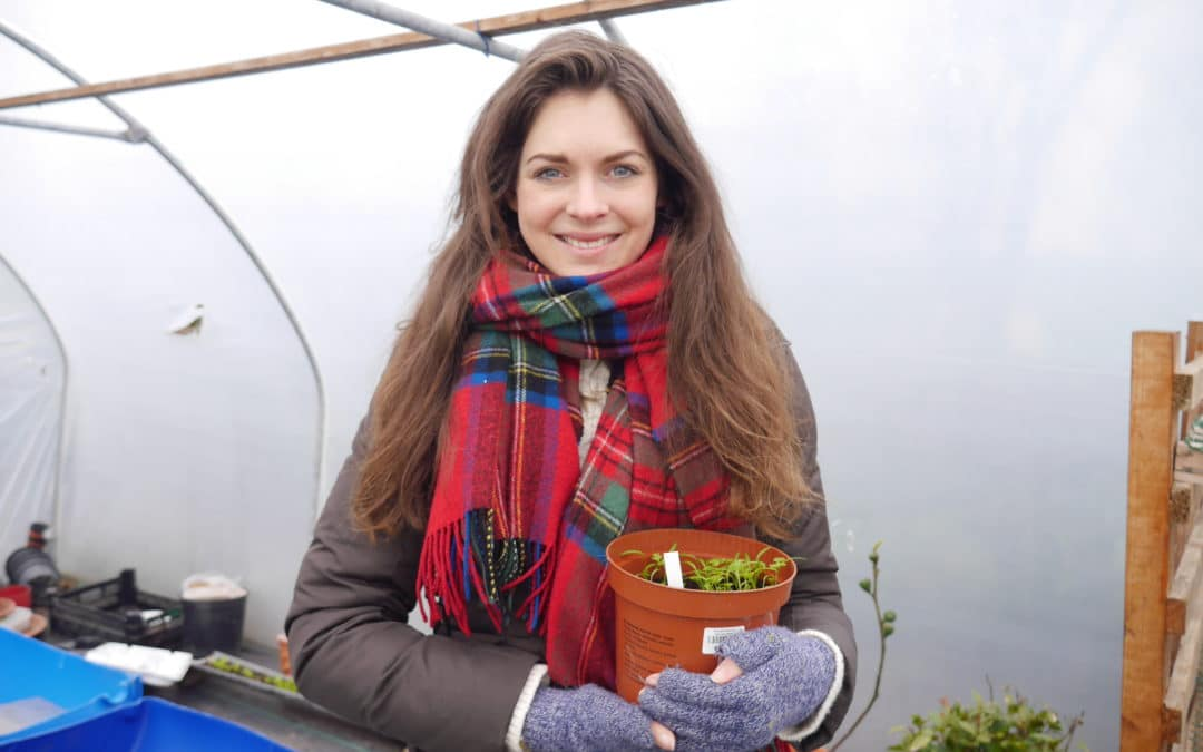 What I'm growing in April-Garden and Polytunnel Updates