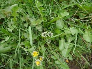 wild-food-spring-april-dandelion-nettle