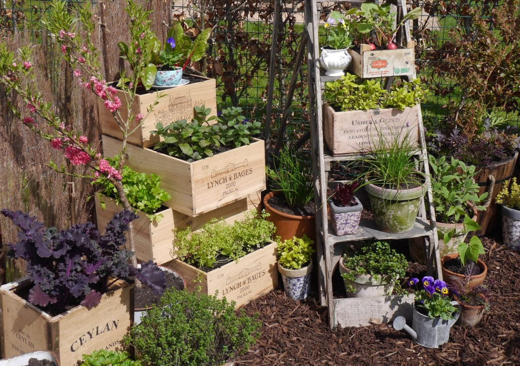 tiny-garden-ideas-wine-boxes-thrifty