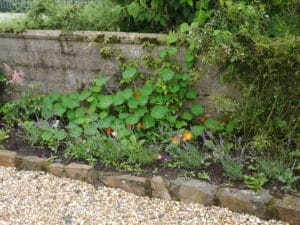 cottage-garden-border-roses-lavender-climbers