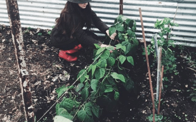 Our Winter Polytunnel and Slow Lifestyle Vlog