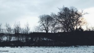 whats in season february guide