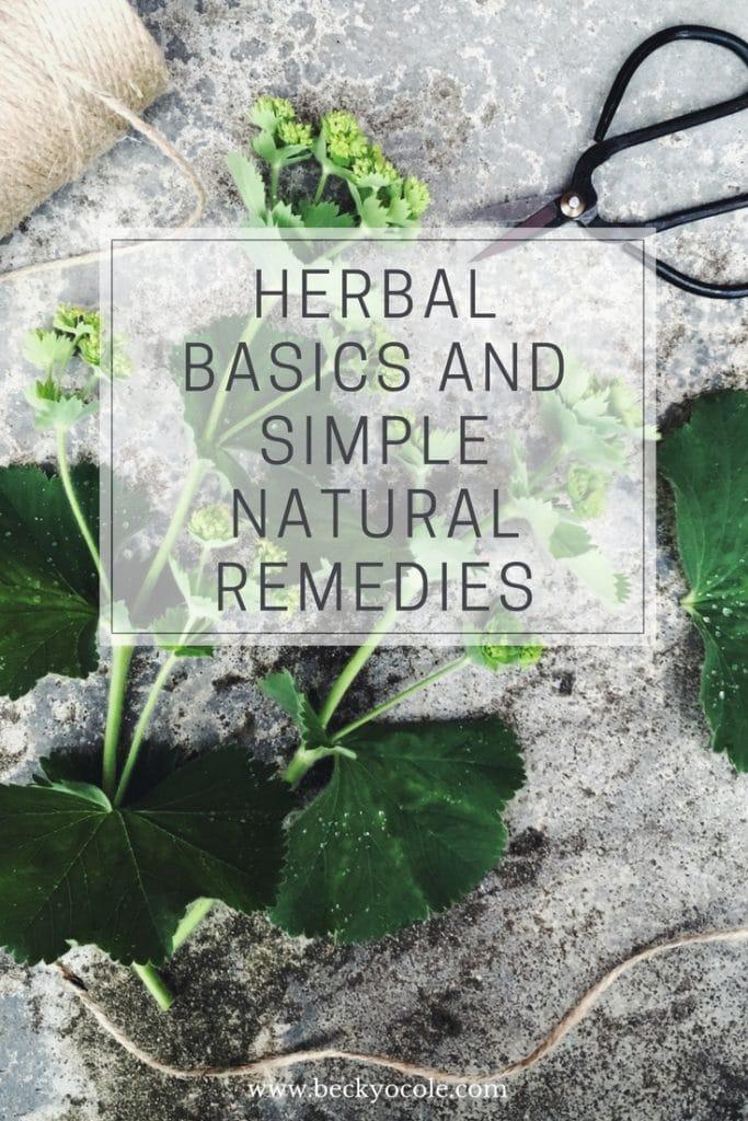 herbalism basics simple natural remedies ladys mantle