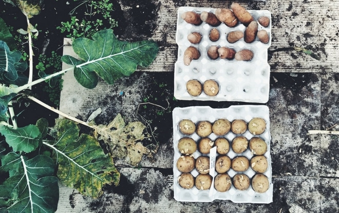 slow living guide to spring chitting potatoes