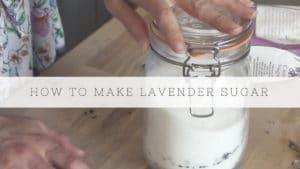 how to make lavender sugar recipe