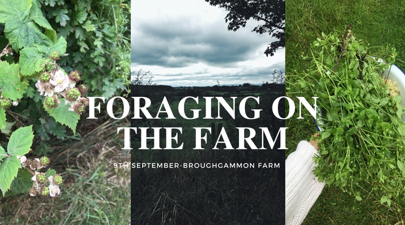 Foraging Workshop on the Farm!