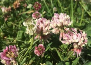 seasonal slow august summer whats in season