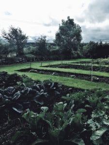 3-autumn-jobs-to-do-in-the-garden