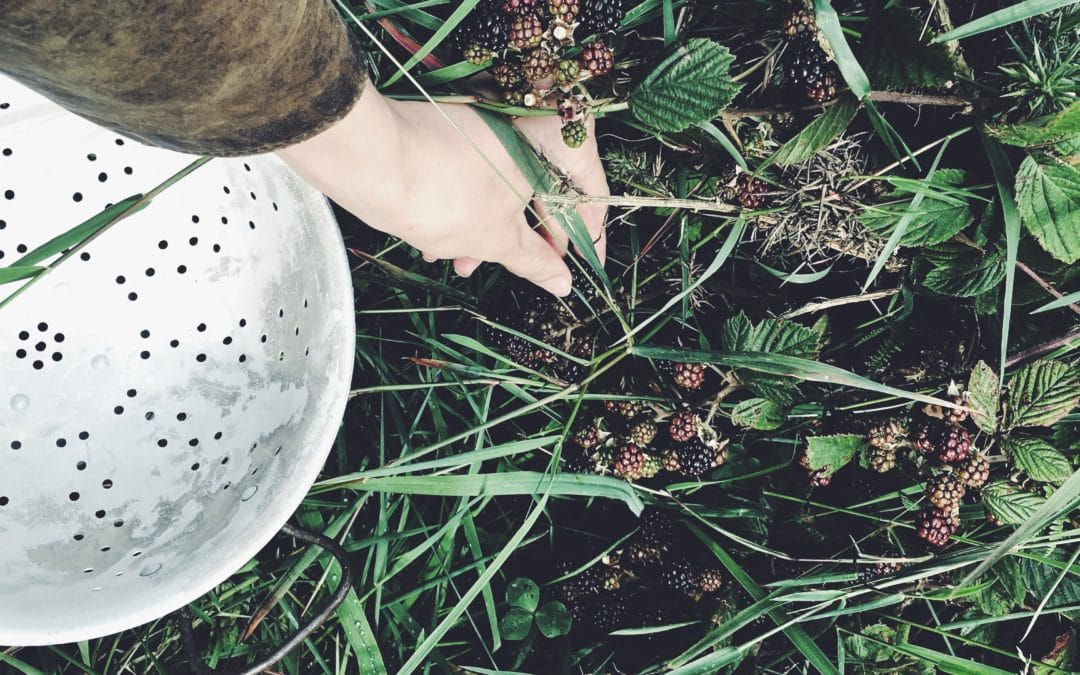 Nature's Guide to September-Grow, Eat, See and Do