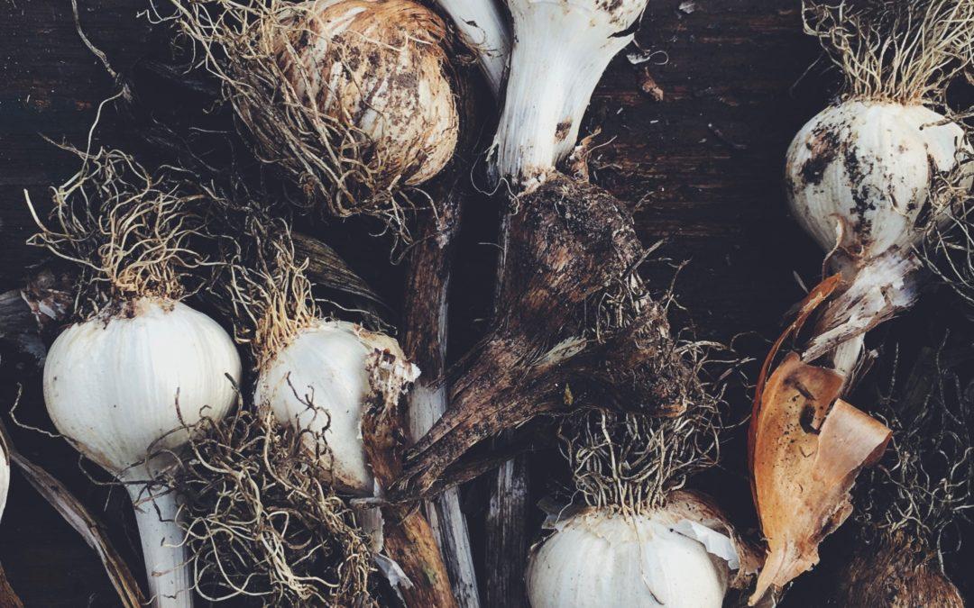 38 Autumnal Gardening Jobs