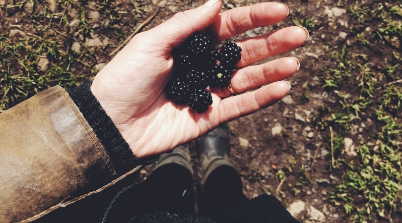 12 Things to Forage in Autumn-Sloes, Rosehips, Haws and More!