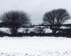 beat winter blues seasonal living winter