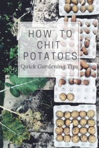 how to chit potatoes earlies