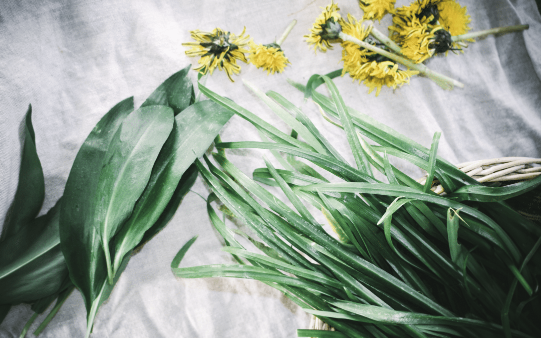 How to Forage for Wild Garlic & Three Cornered Leek