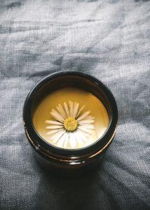 daisy bruise balm recipe daisy remedies uses