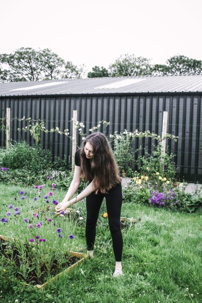 growing edible flowesr garden becky o cole