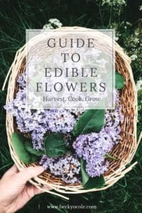 growing edible flowers uk
