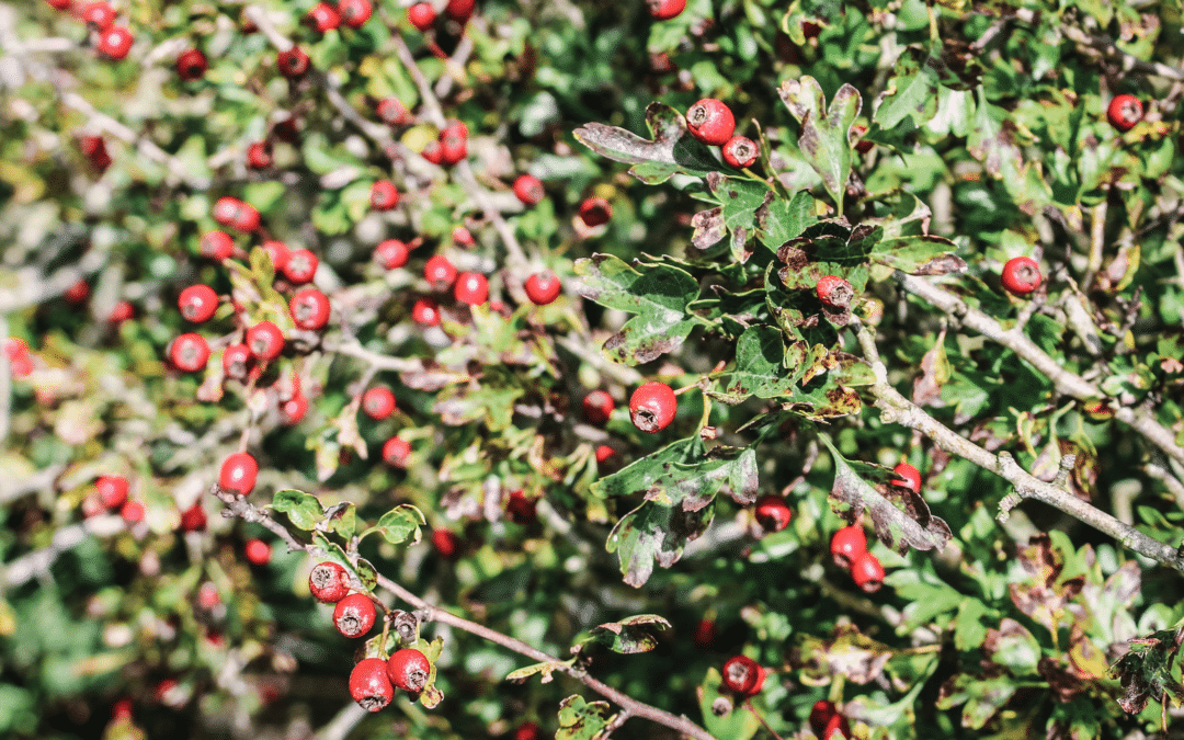 Autumn Guide- Nature, Gardening, Seasonal Food and Foraging