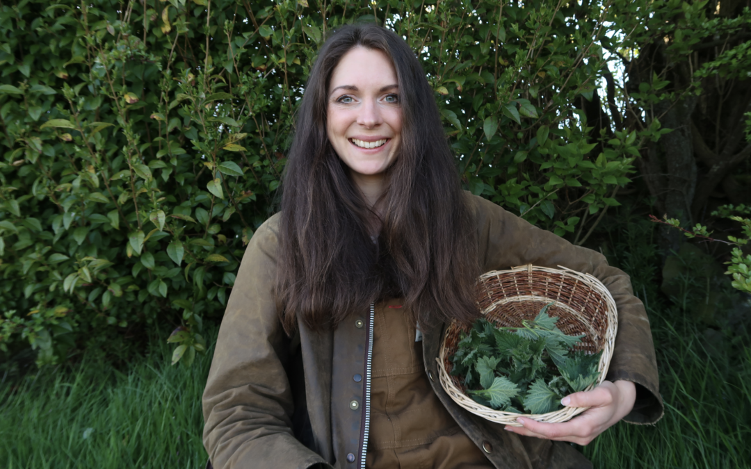 Nettles-How to forage nettles and use them in the kitchen