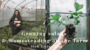 growing salads and homesteading on farm
