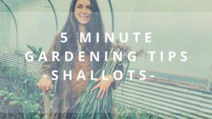 5 minute gardening shallots