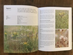 wild about weeds jack wallington review gardening booksn2
