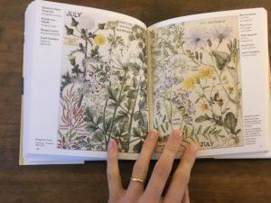 wildflowers margaret erskine wilson review.