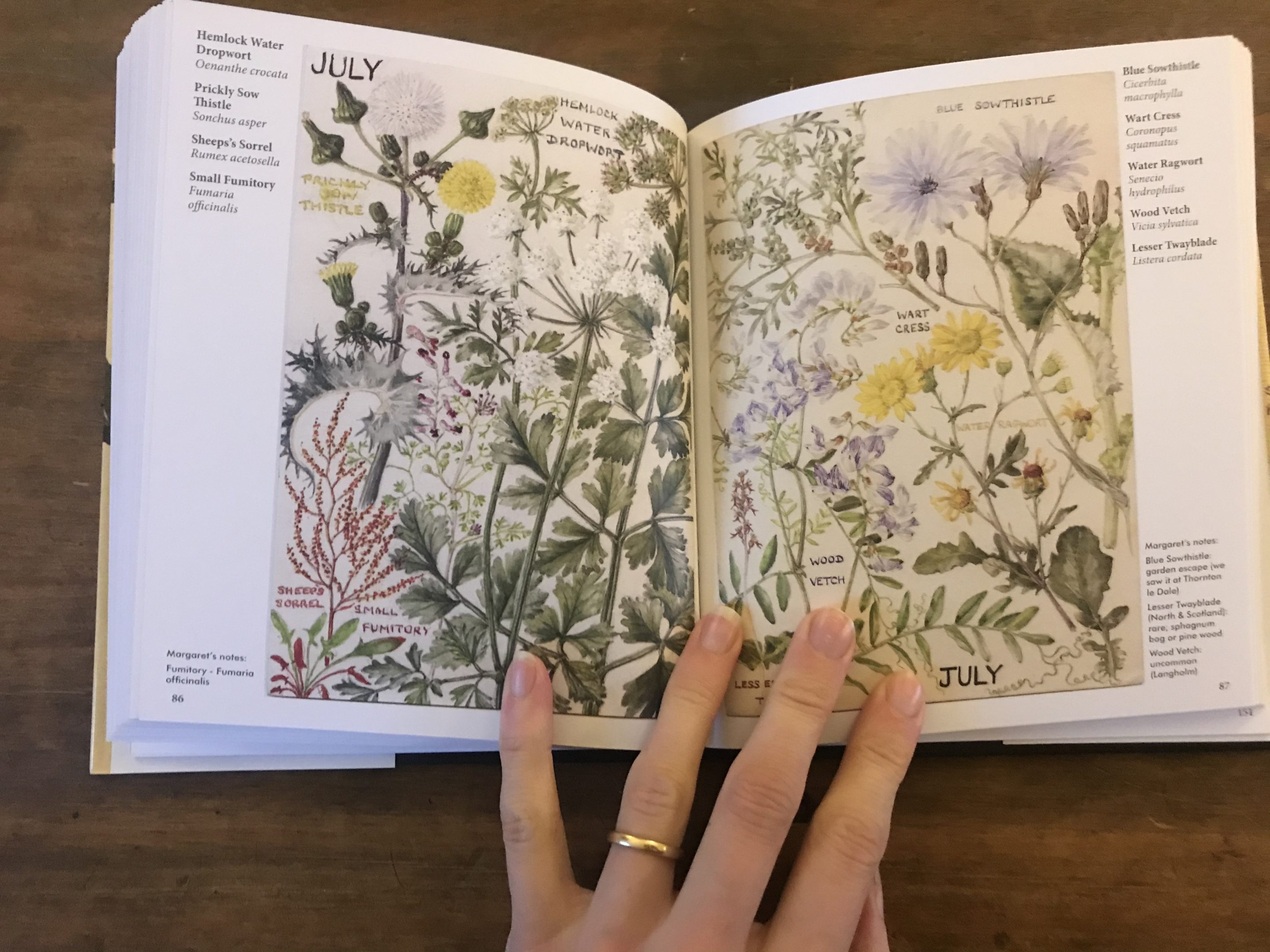 wildflowers margaret erskine wilson review.